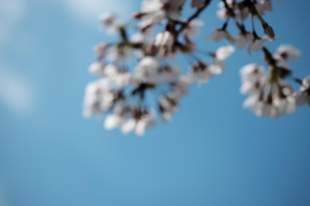桜の失敗写真