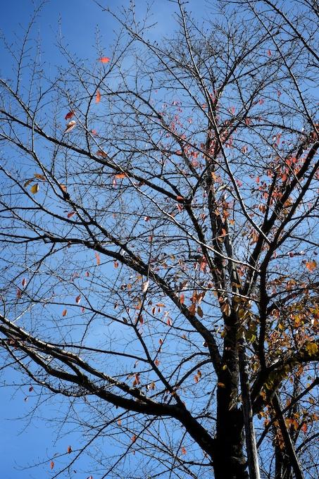 青空と紅葉した枯れ葉