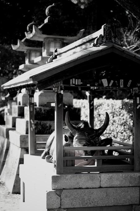 牛|北野天満宮|京都紅葉
