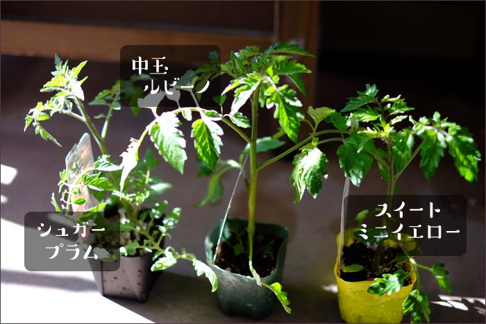 3種類のミニトマトの名前