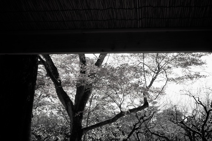 茶店からの紅葉|北野天満宮