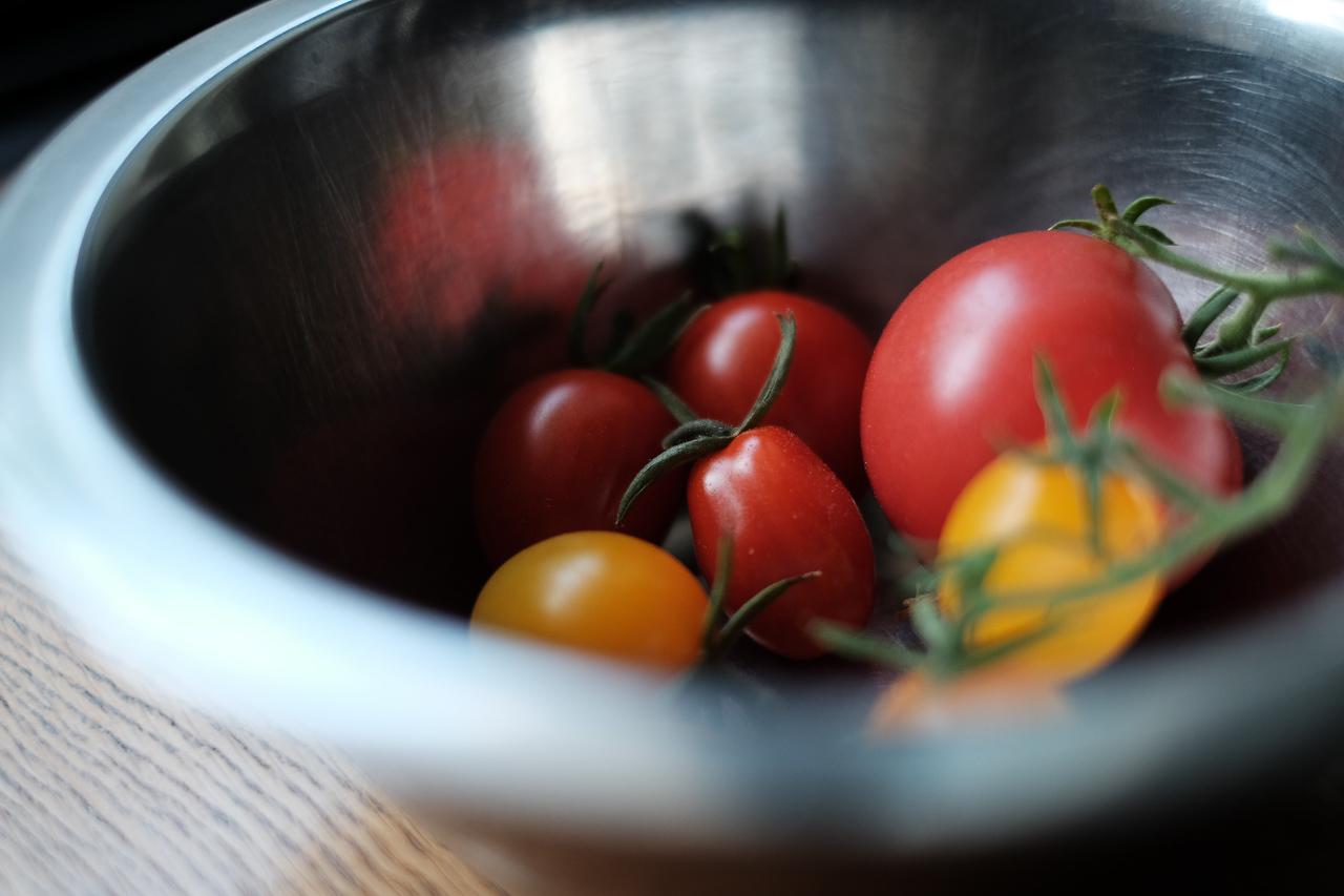 トマトとミニトマトの今シーズン初収穫