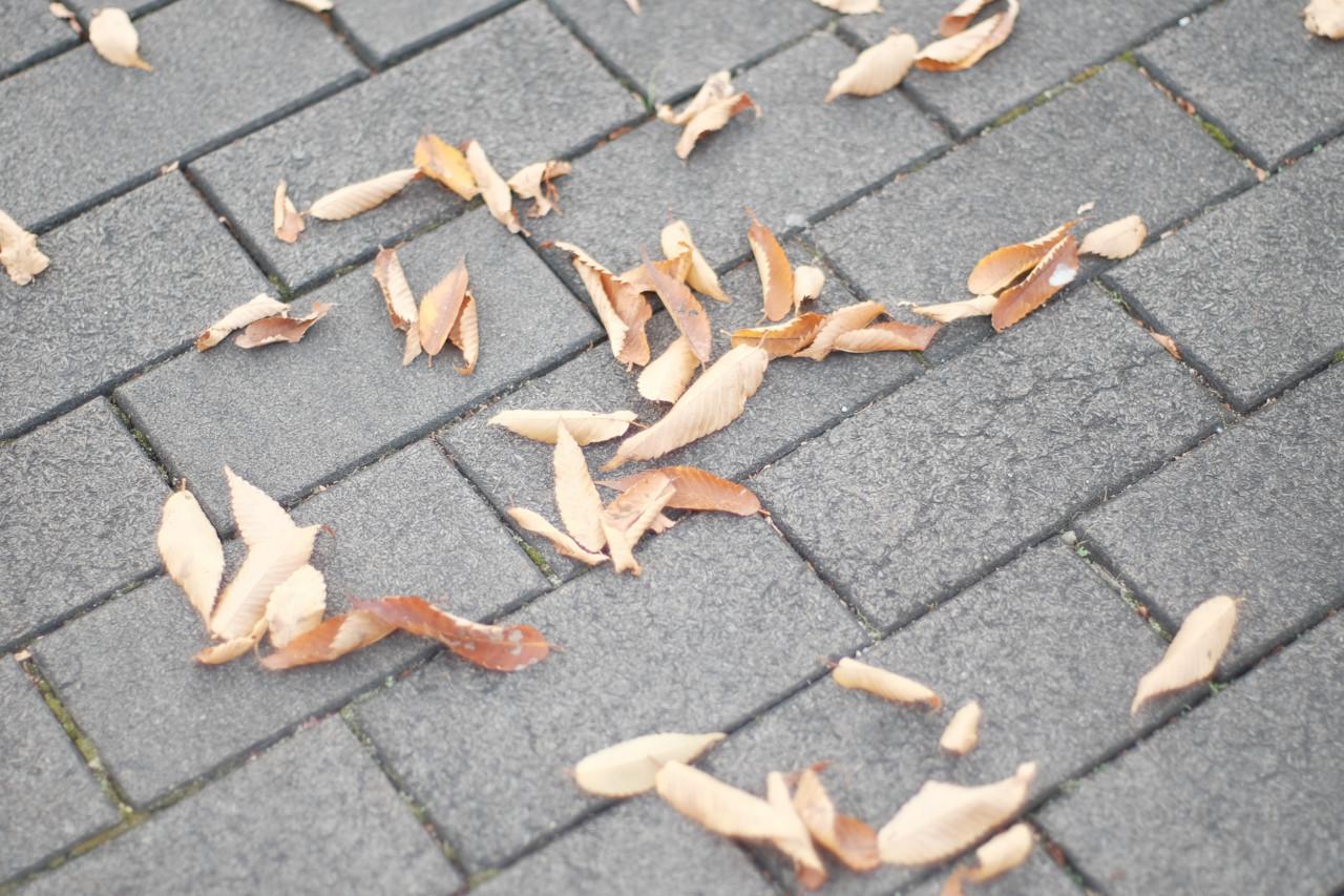 秋、道に枯れ葉