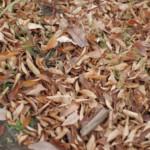 何も変わってないように思えるけれど、すっかり季節は秋。