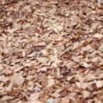 枯れ葉の絨毯