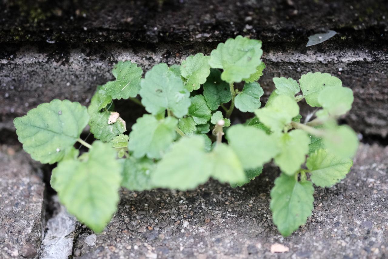 隙間の草花