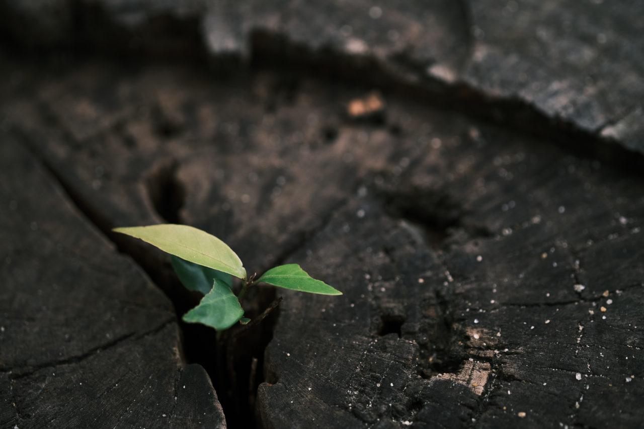 木株から発芽