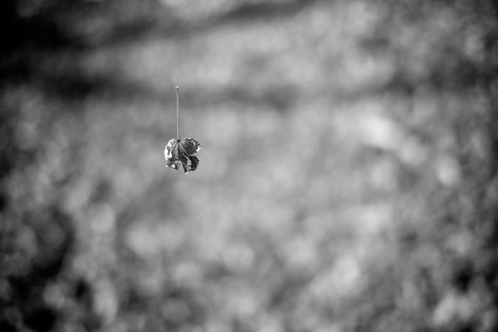 浮かぶ紅葉の枯れ葉|北野天満宮