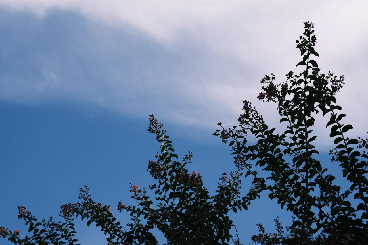 サルスベリと秋の空