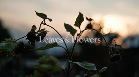 Leaves & Flowers SHOP