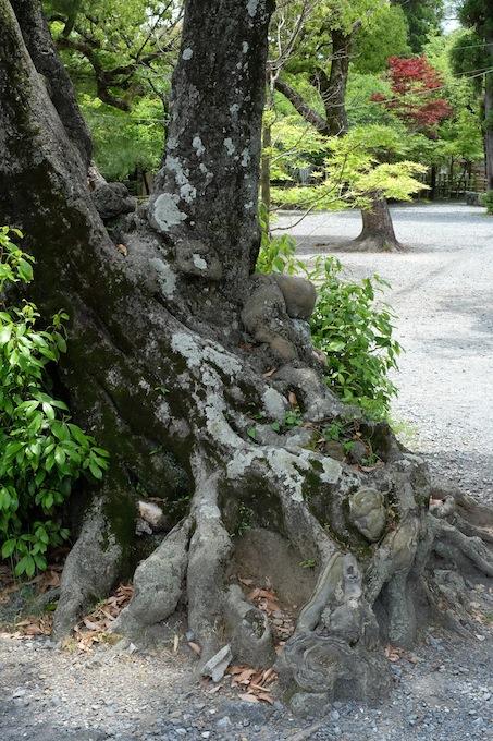 長岡天満宮 木の幹